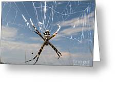 Banna Spider Greeting Card