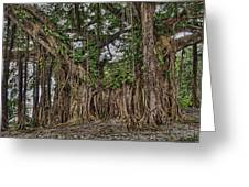 Banyan Tree At Folly Greeting Card