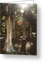 Banyan Tree Park Greeting Card