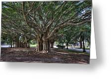 Banyan Tree Reaching For The Sky Greeting Card