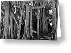 Banyan Trees Greeting Card