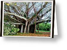 Banyon Tree Greeting Card