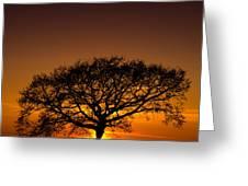 Baobab Greeting Card
