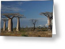 baobab parkway of Madagascar Greeting Card