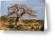 Baobab Tree Ruaha Np Tanzania Greeting Card