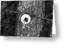 Barb Wire Insulator 3 Greeting Card