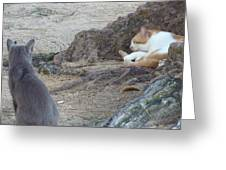 Barbados Cat Family Greeting Card