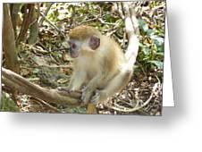 Barbados Green Monkey Greeting Card