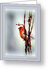 Barbed Wire And Finch Greeting Card