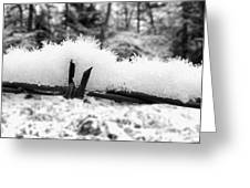 Barbed Wire In Snow Greeting Card