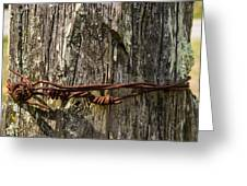 Barbed Wire Rustic Twist Greeting Card