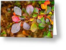 Barberry Greeting Card