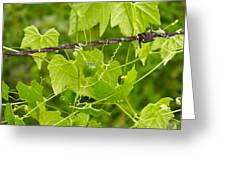 Barbwire And Vine Greeting Card