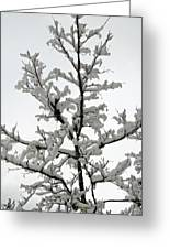 Bare Branches With Snow Greeting Card