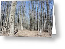 Bare Forest Greeting Card