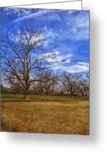 Bare Pecan Trees Greeting Card
