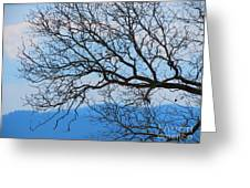 Bare Tree Against Blue Sky Greeting Card