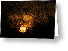 Bare Tree Branches With Winter Sunrise Greeting Card