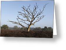 Bare Tree In Forest Greeting Card