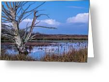 Bare Tree In Marsh Greeting Card