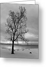 Bare Tree On A Wintery Tahoe Shoreline Greeting Card