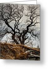 Bare Tree On The Hill Greeting Card