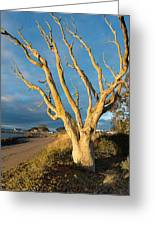 Bare Tree On The Spit Greeting Card