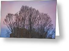 Bare Trees And Autumn Sky Greeting Card
