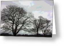 Bare Trees Winter Sky Greeting Card