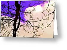 Bare Winter Branches Greeting Card by Michael Sokalski