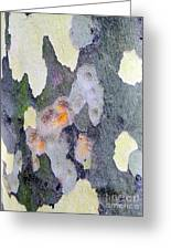 Bark Beauty Greeting Card