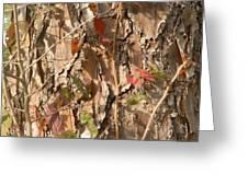 Bark IIi Greeting Card