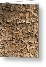 Bark Of A Tree Greeting Card