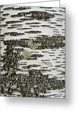 Bark Of Paper Birch Greeting Card