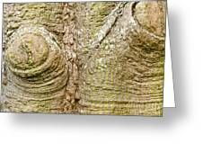 Bark Of Silk Floss Tree Background Texture Pattern Greeting Card