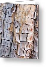 Bark On A Tree In The Desert In Sedona Greeting Card