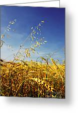 Barley And Oat Vertical Hdr Greeting Card
