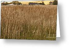Barley Field Greeting Card