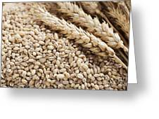 Barley Grains And Stalks Greeting Card
