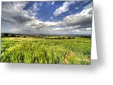 Barley View  Greeting Card