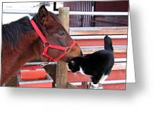 Barn Buddies Greeting Card