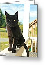 Barn Cat Pose Greeting Card