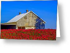 Barn In Red Clover Greeting Card by Denise Darby