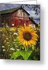 Barn Meadow Flowers Greeting Card