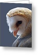Barn Owl Dry Brushed Greeting Card