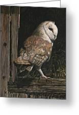 Barn Owl In The Old Barn Greeting Card