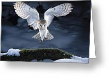 Barn Owl Landing Greeting Card