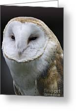 Barn Owl No.1 Greeting Card