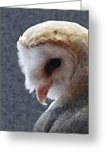 Barn Owl Painterly Greeting Card