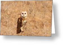 Barn Owl Perching Greeting Card